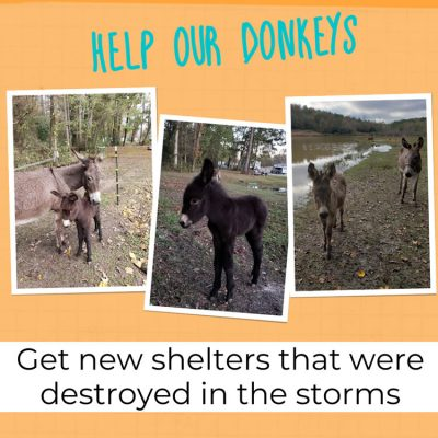 Help our donkeys